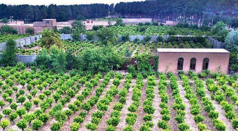 انگور؛ اقتصادیترین محصول منطقه خلیلآباد