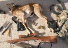 شکار ۶۷ گونه جانوری توسط متخلفان در کاشمر