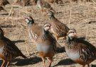 کشف ۲۴ قطعه کبک و ۴ قطعه قرقاول از بازار پرندگان کاشمر