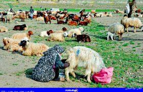 عشایر شهرستان کاشمر